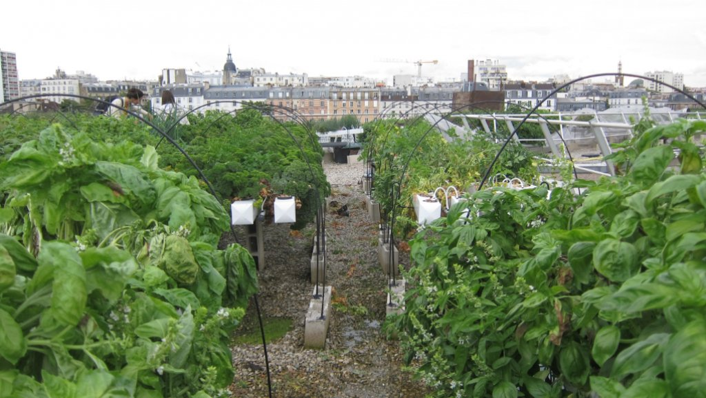 A rooftop urban farm on top of the RATP-building in eastern Paris.