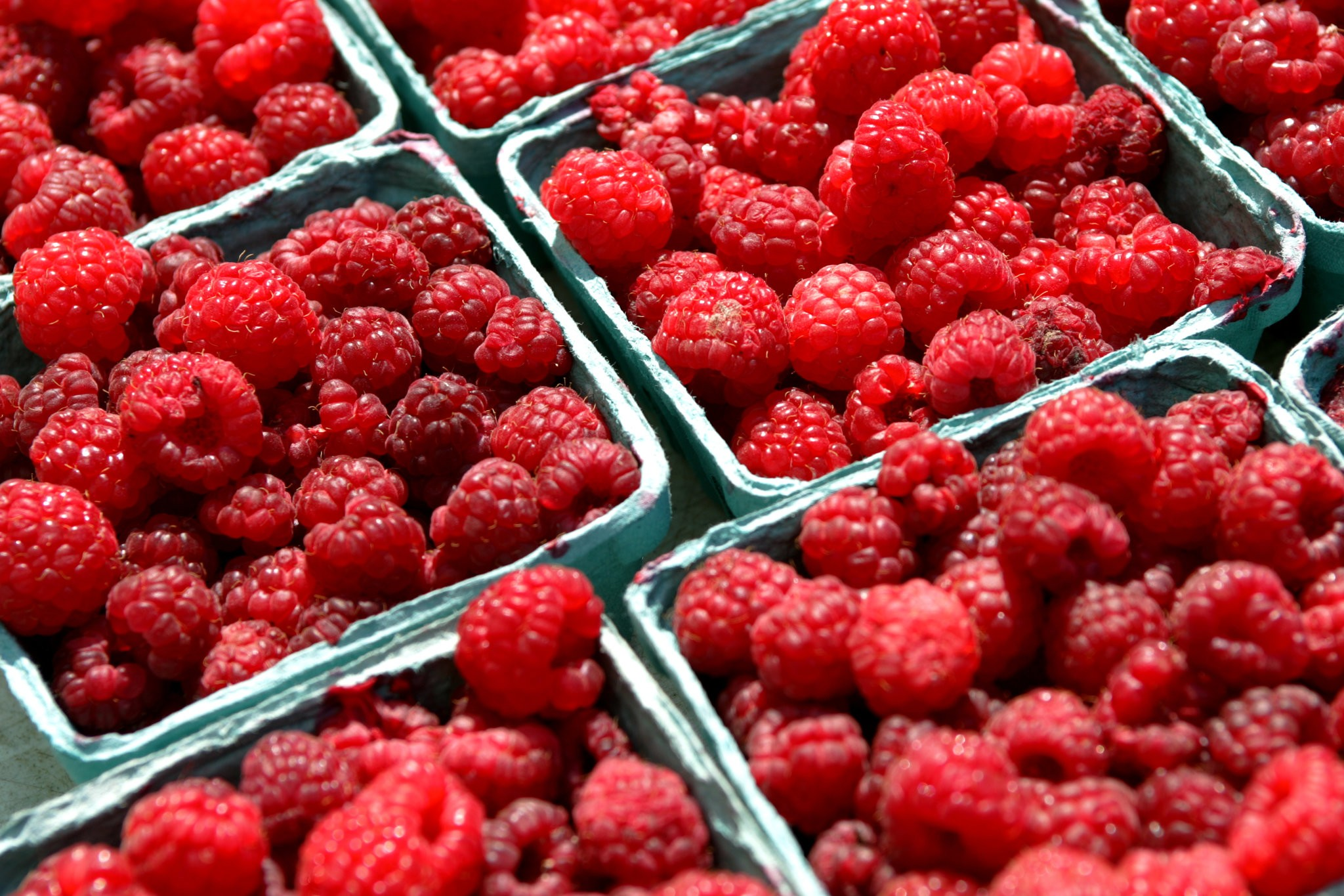 Some farmers in upstate New York have given up on raspberries after uncontrollable waves of the spotted wing Drosophila, a fruit fly whose larvae can turn berries to mush. Credit Jessica Ebelhar/The New York Times