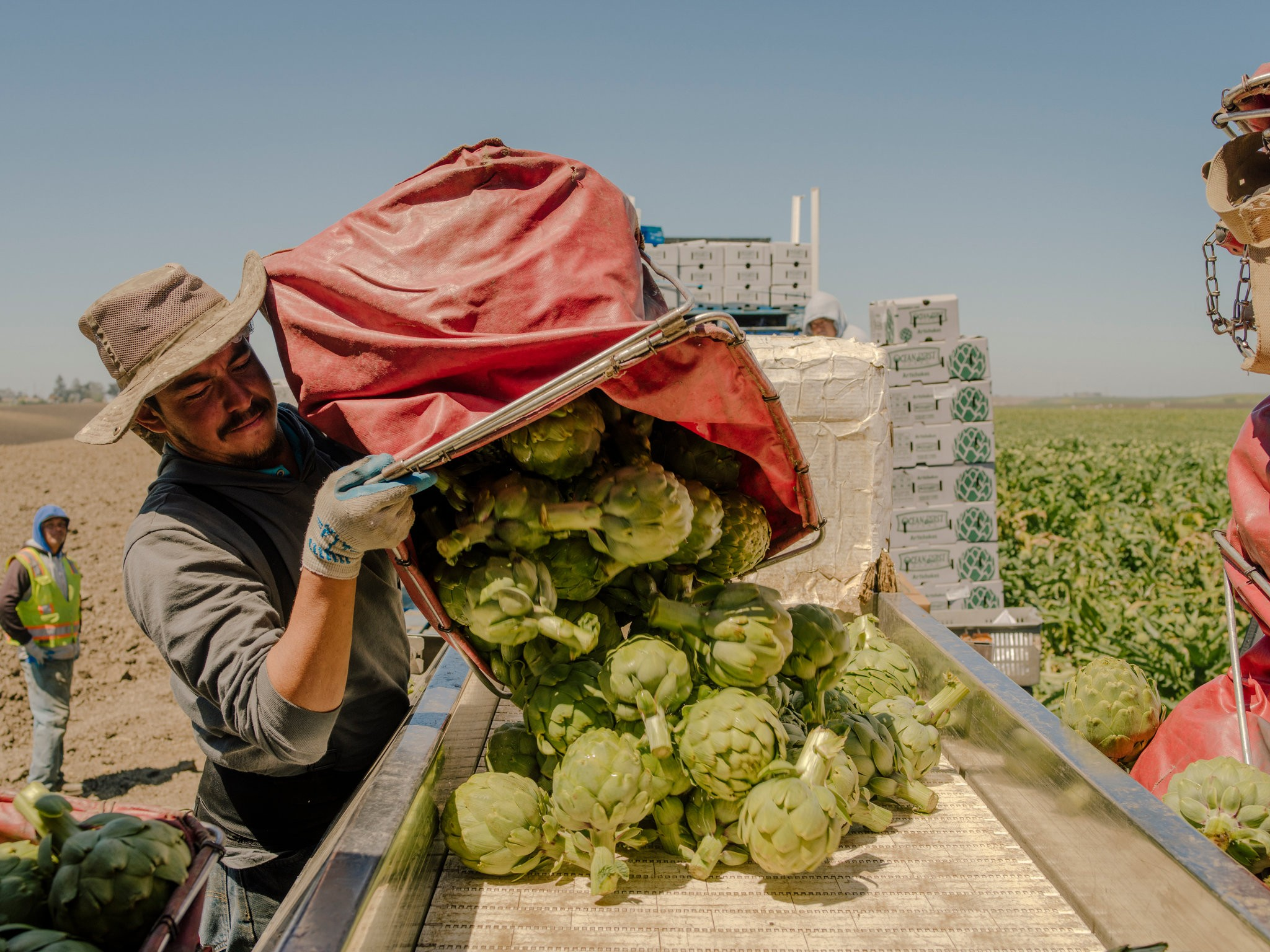 The cool marine air layer that once made Castroville, Calif., an ideal place to grow artichokes has become less reliable.CreditJustin Kaneps for The New York Times