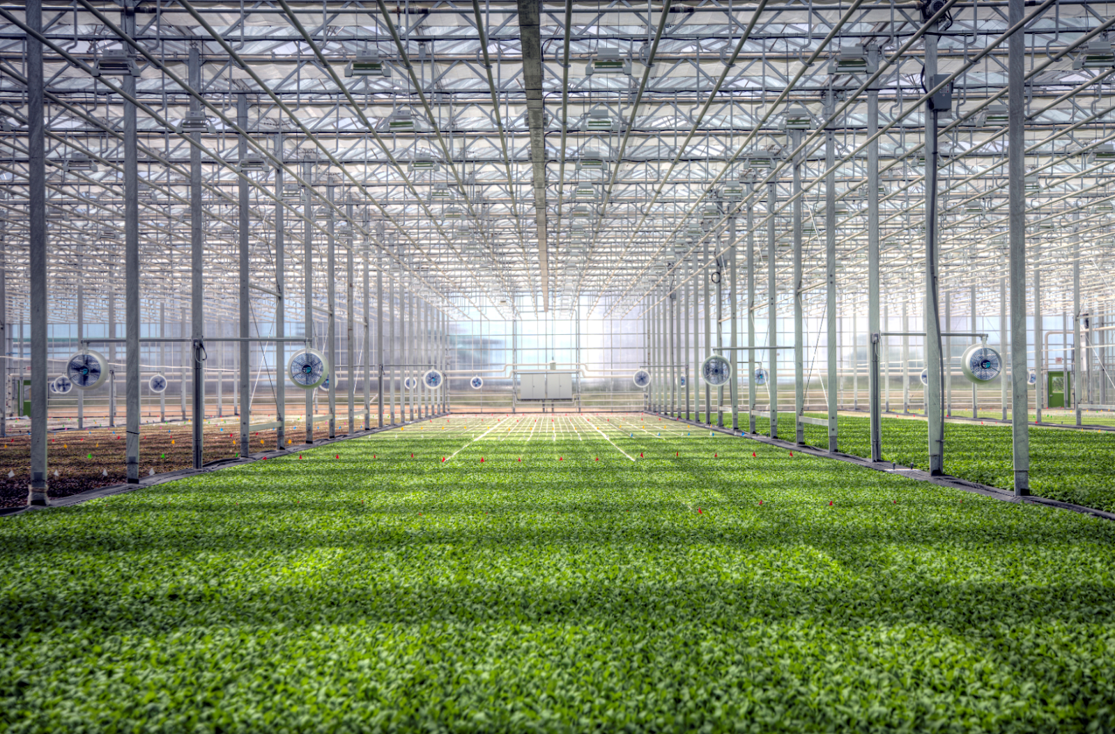 Rendering of a BrightFarms greenhouse. Salad greens grow on floating rafts in a hydroponic system. | Source: BrightFarms