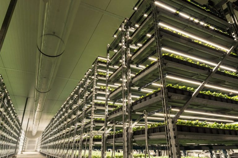 Shenandoah integrated Greenhouse and Vertical Farm facilities with recently installed LED grow-lights. | Source:  Fluence