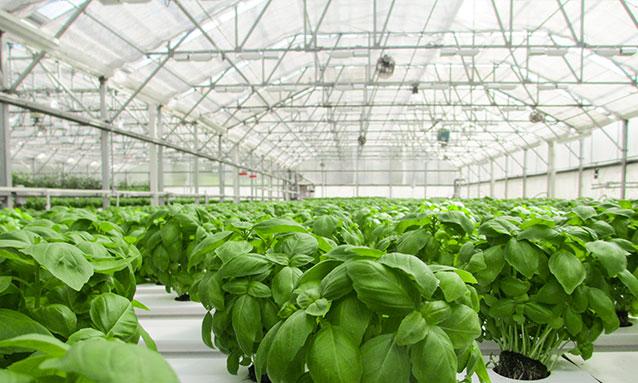 greenhouses-flat-oval-tube-mah-120-3-cnc-profile-bender-8-web.jpg