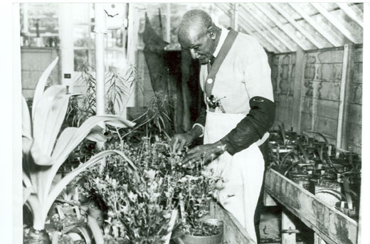 D.2.10 Carver in greenhouse at Tuskegee Institute, circa 1935.jpg