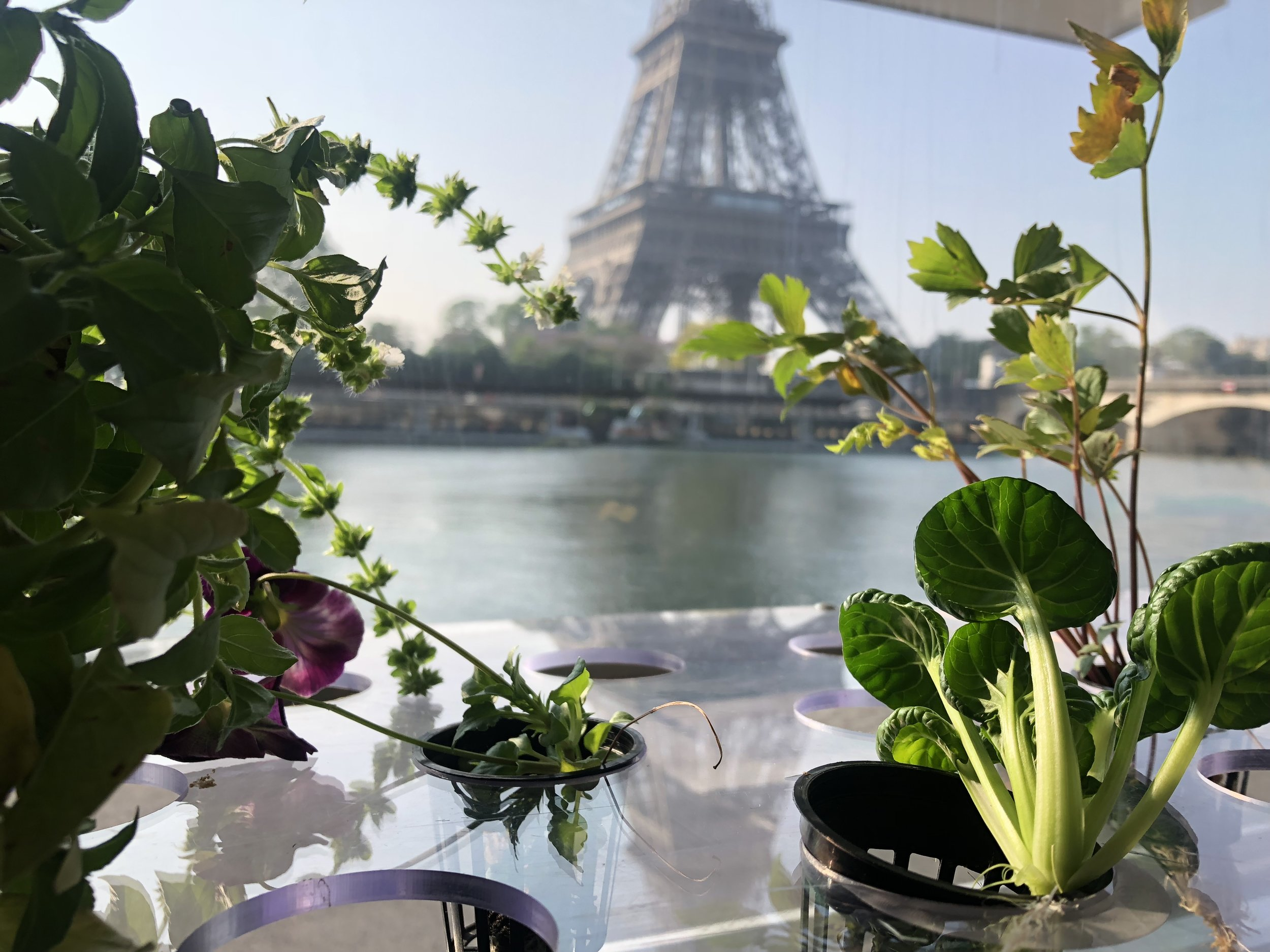 Inside the Growtruck- Eiffel Tower View.JPG