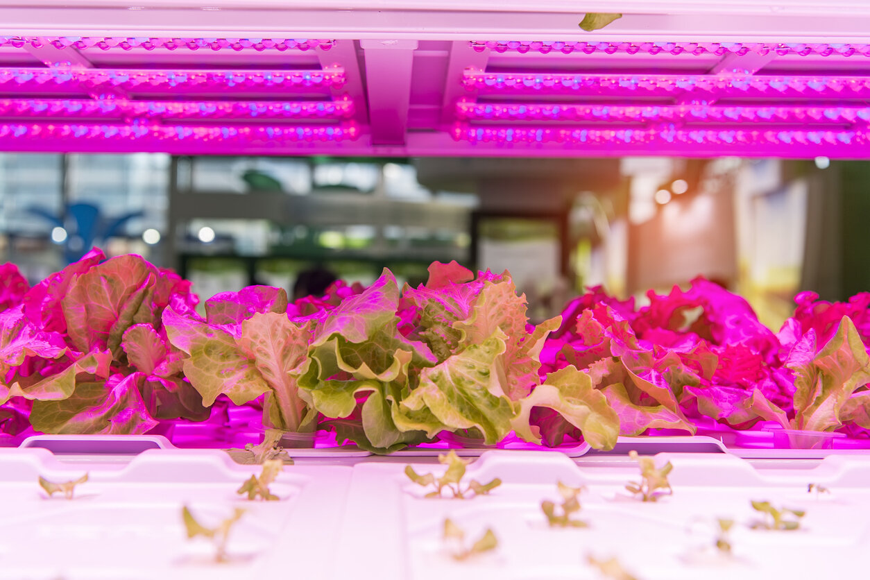 Greenhouse-vegetables-Plant-with-Led-Light-Indoor-Farm-Technology-961628798_1258x838.jpeg