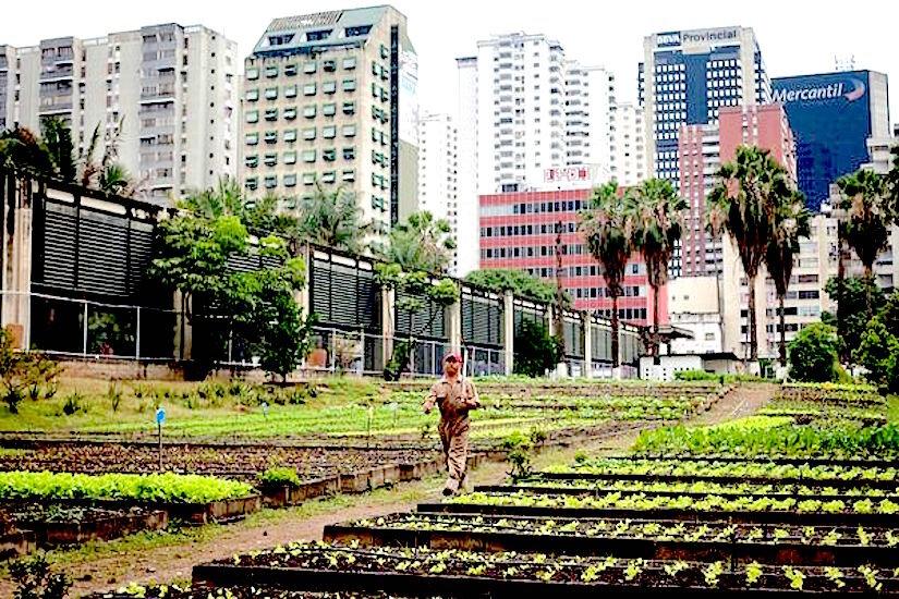 earth-day-urban-farming-venezuela_51635_600x450.jpg