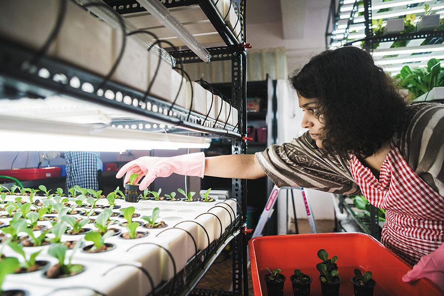 Sakina Rajkotwalla quit her job at Magic Bus to start Herbivore Farms;   Image: Ronit Sarkar