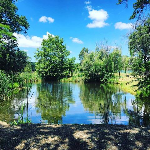 Sit under the willow & enjoy the refreshing sounds of the pond