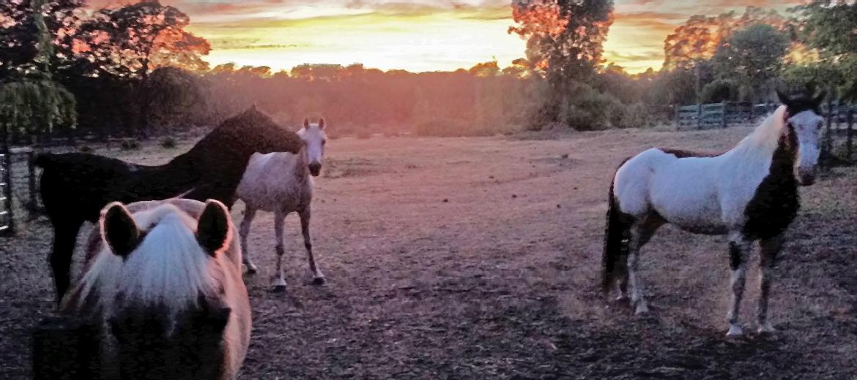 blog-herd-sunset-1170x520.jpg