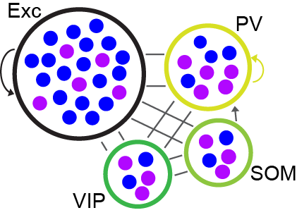 network_model_schematic.png