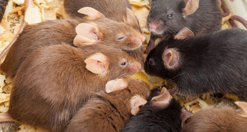 mouse_social.jpg