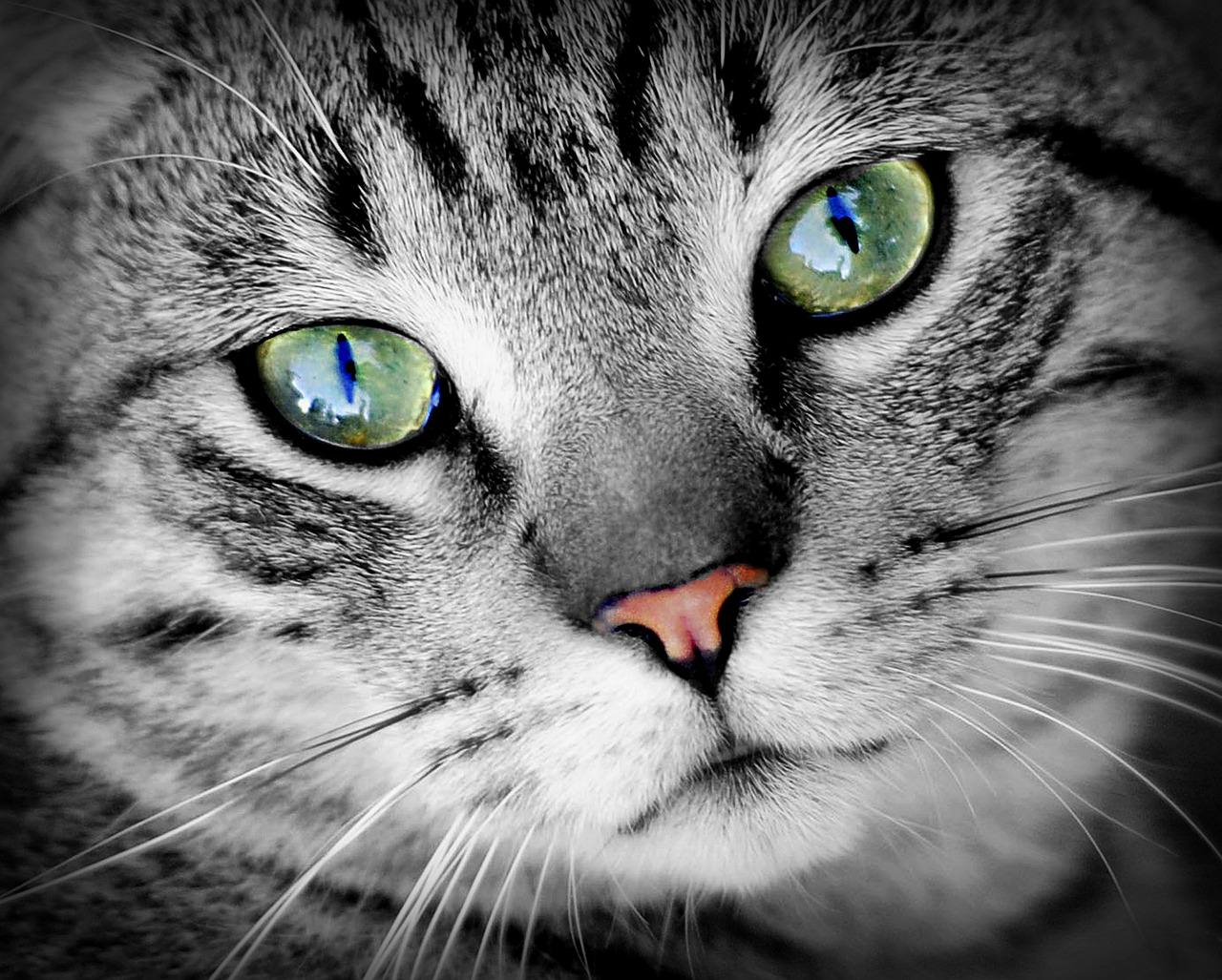 Cats, snakes, and alligators have Vertically elongated pupils to enhance depth perception for hunting. -