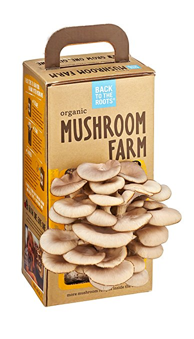 Grow gourmet, organic oyster mushrooms right out of the box in just 10 days! Simple, easy and fun! - $