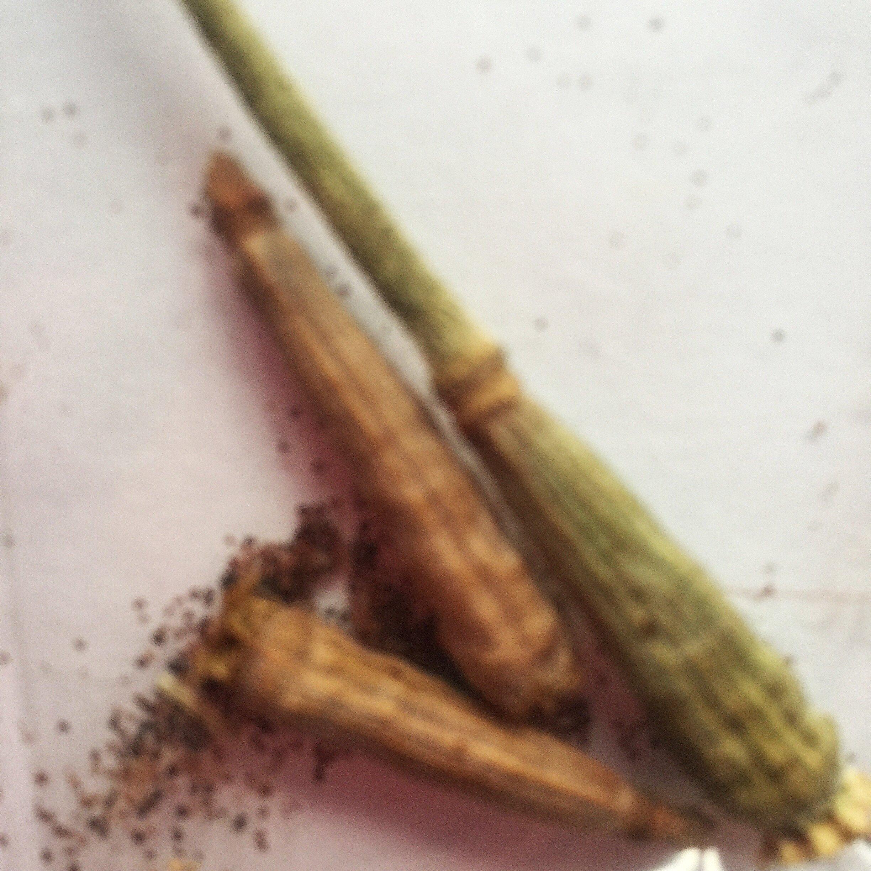 Poppy+Seeds.jpg
