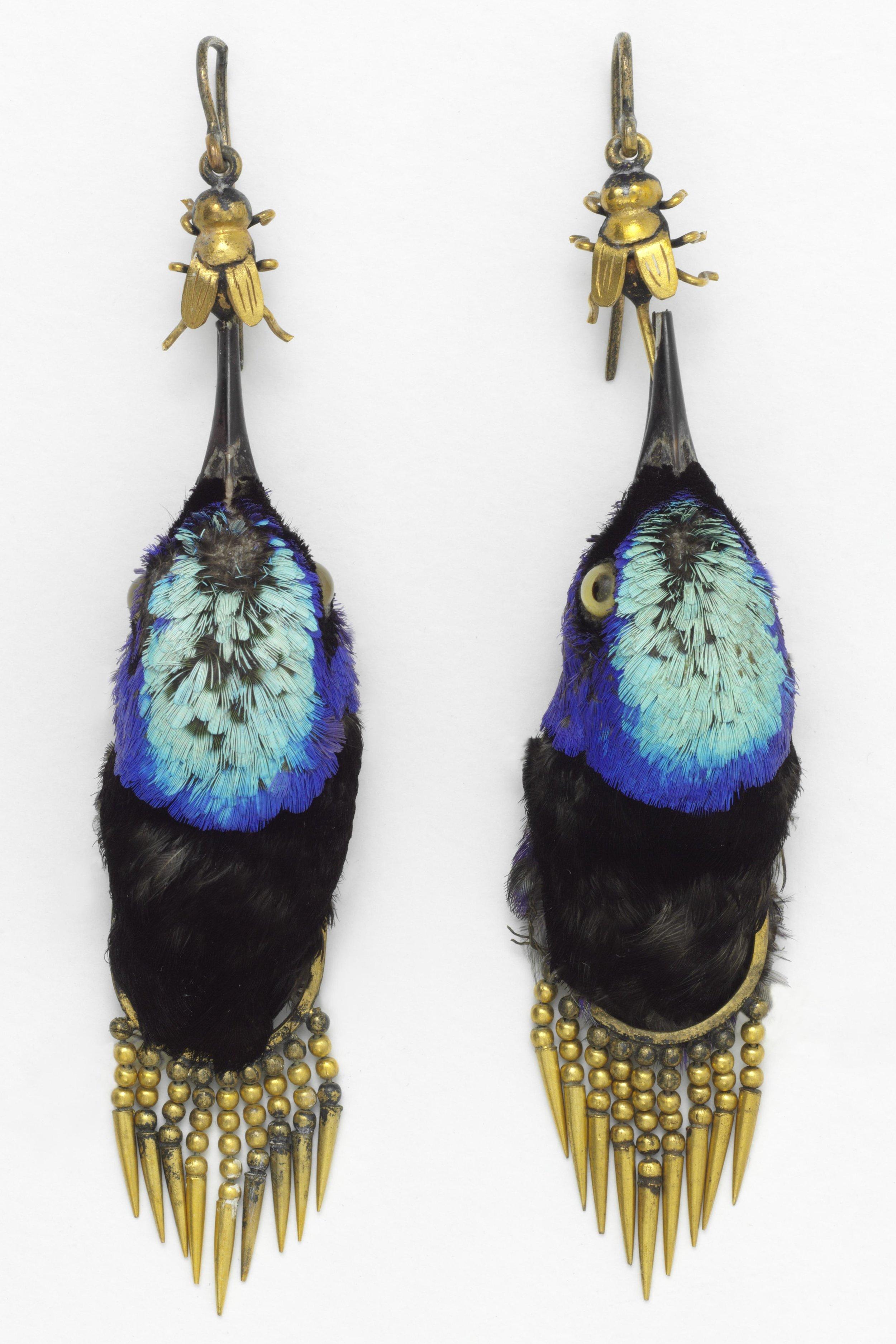 Earrings - Earrings made from heads of red legged honeycreeper birds.