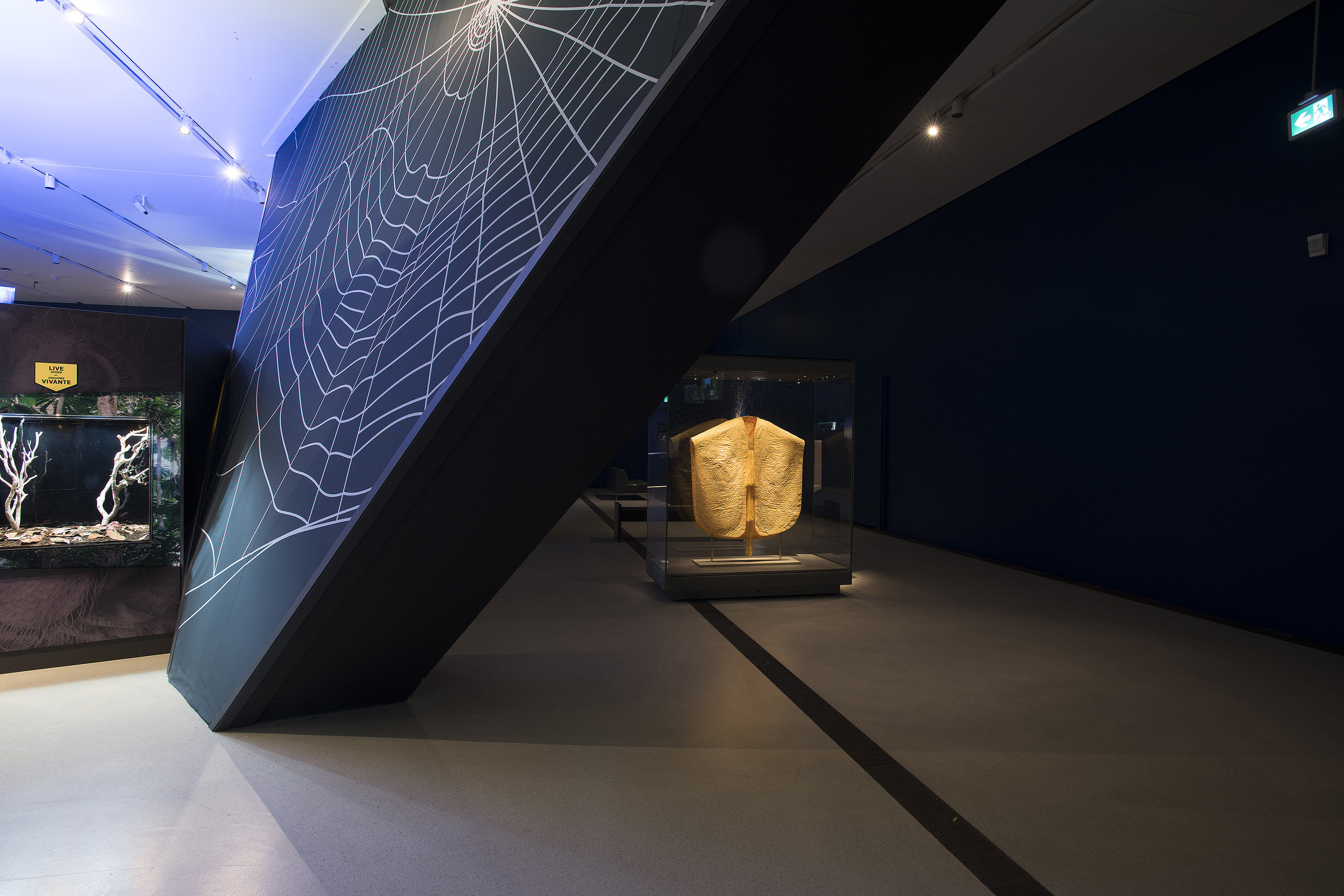 """The exhibit """"Spiders: Fear & Fascination"""" - is on view at the ROM until January 6, 2019."""