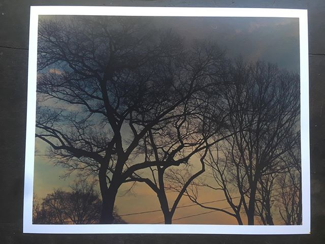 """Neighborhood trees at sunset.  Getting a little better at color. It still takes like 45 minutes to make a test print, adjust and get one """"final"""" print. A lot slower than black and white."""