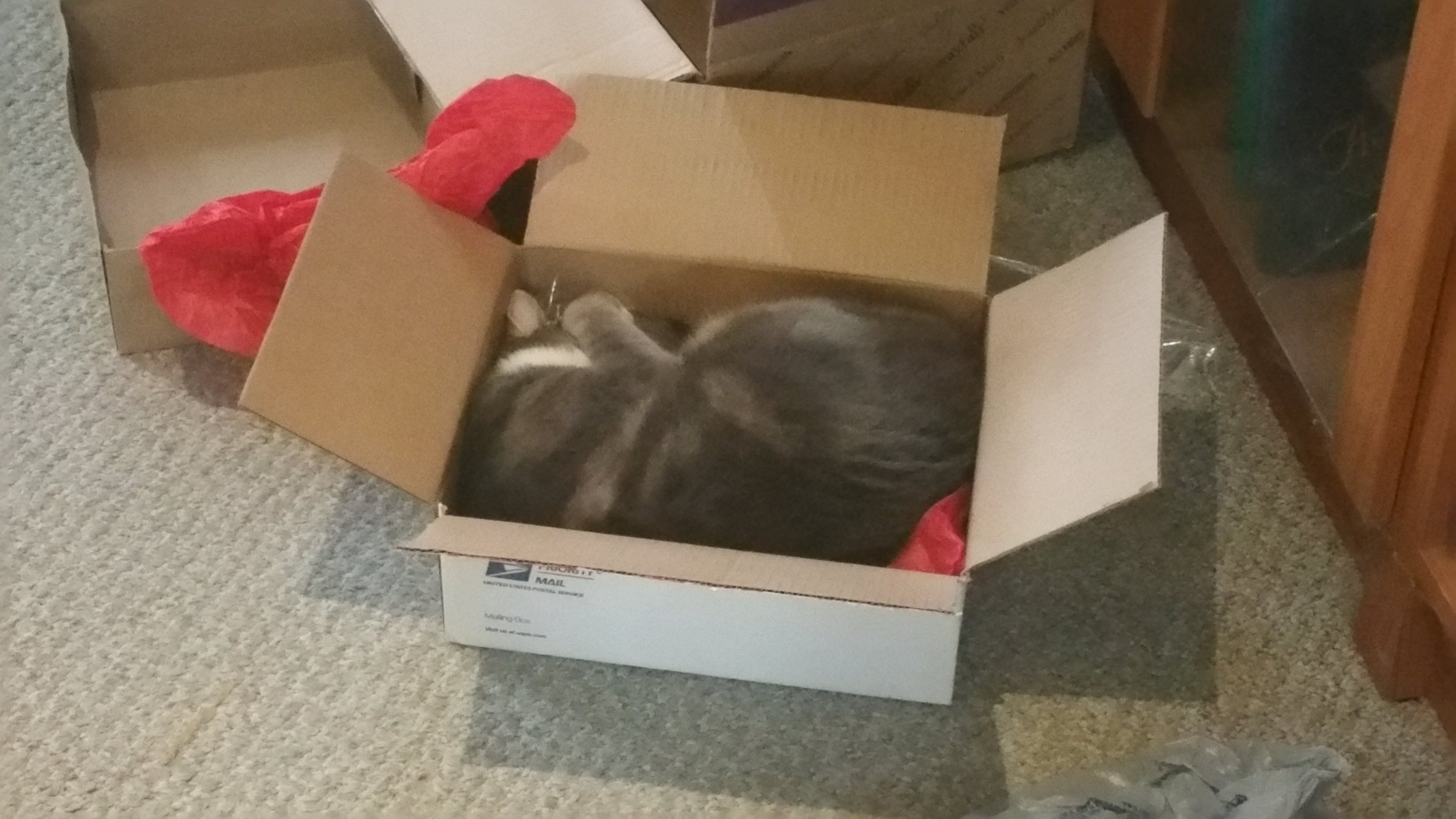 Ollie in a Box