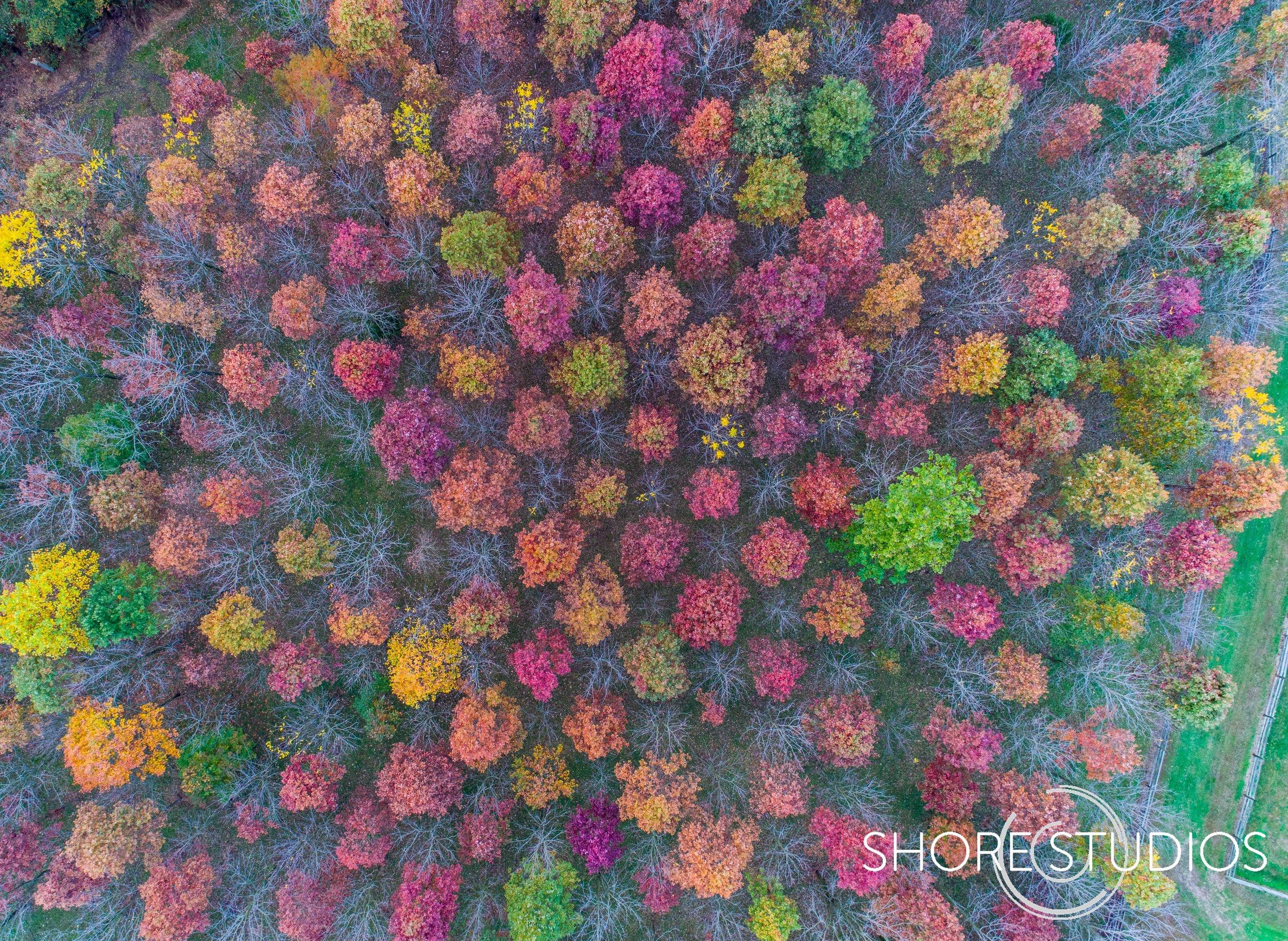 Cecil County Fall Foliage.jpg