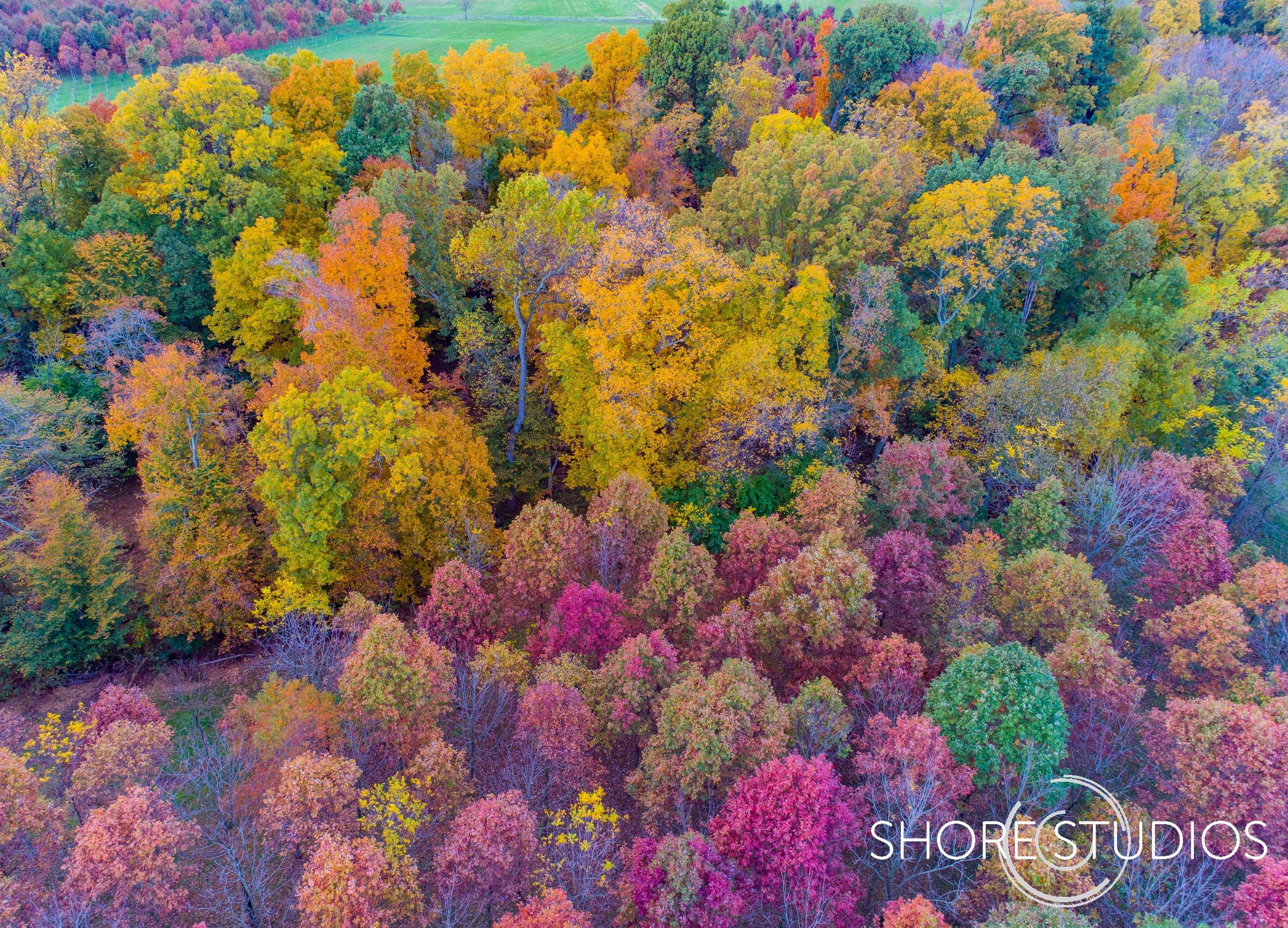 Cecil County Fall Foliage 2.jpg
