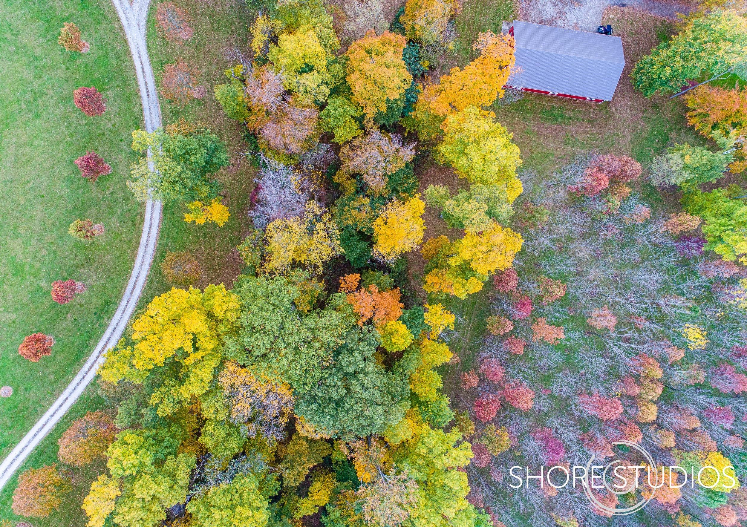 Fall Foliage and Path.jpg