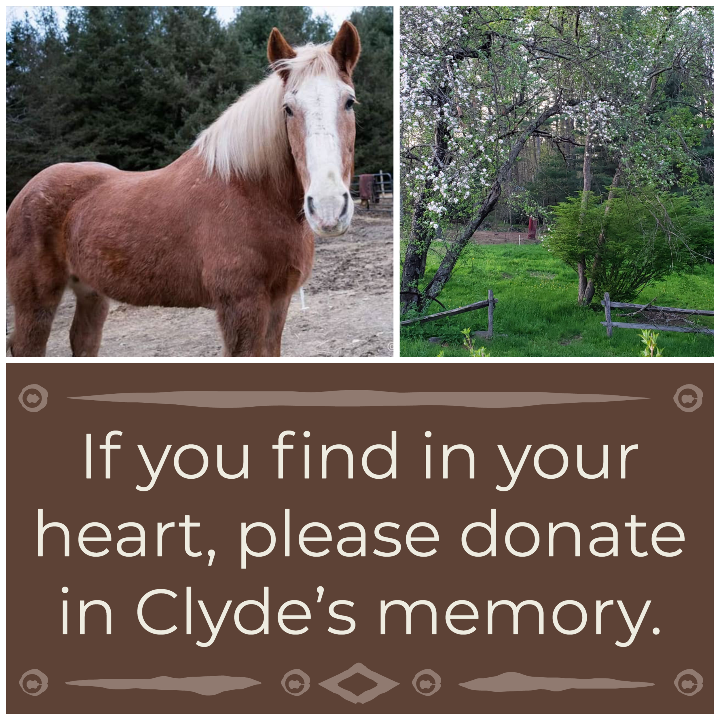 Donate Clyde (2).png