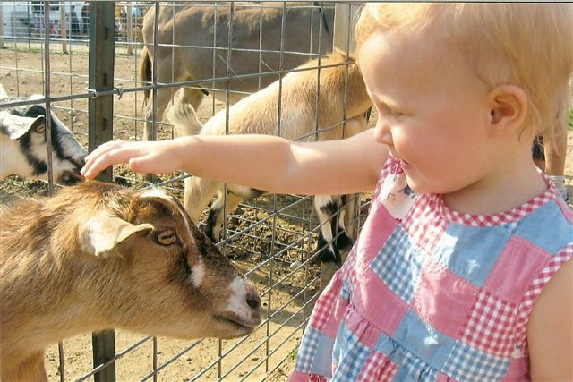 Murray_family_farms_Has_A_Petting_zoo_for_Children.jpg