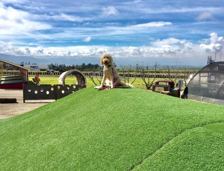 Murray_family_farms_has_Special_dog_events.jpg