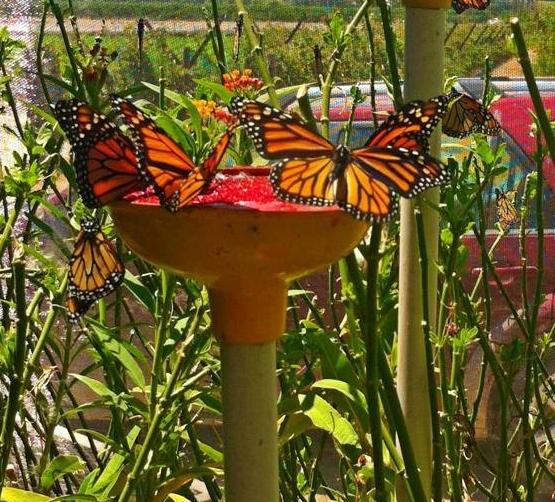 Butterflys_For_kids_in_Arvin_Bakersfield.jpg