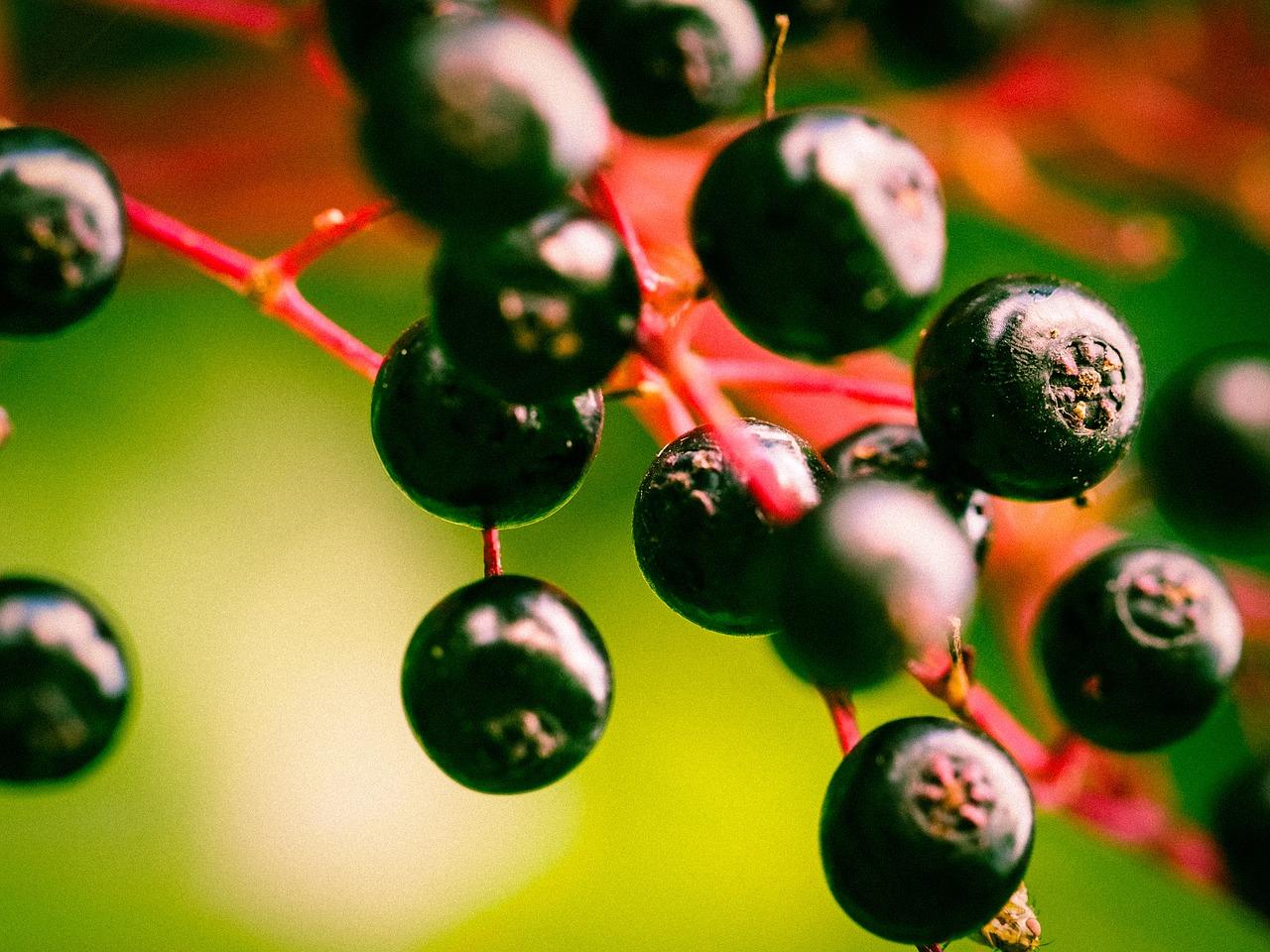 berries-949061_1280.jpg