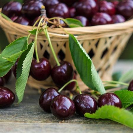 Bing_Cherry_Tree_450_MAIN.jpg