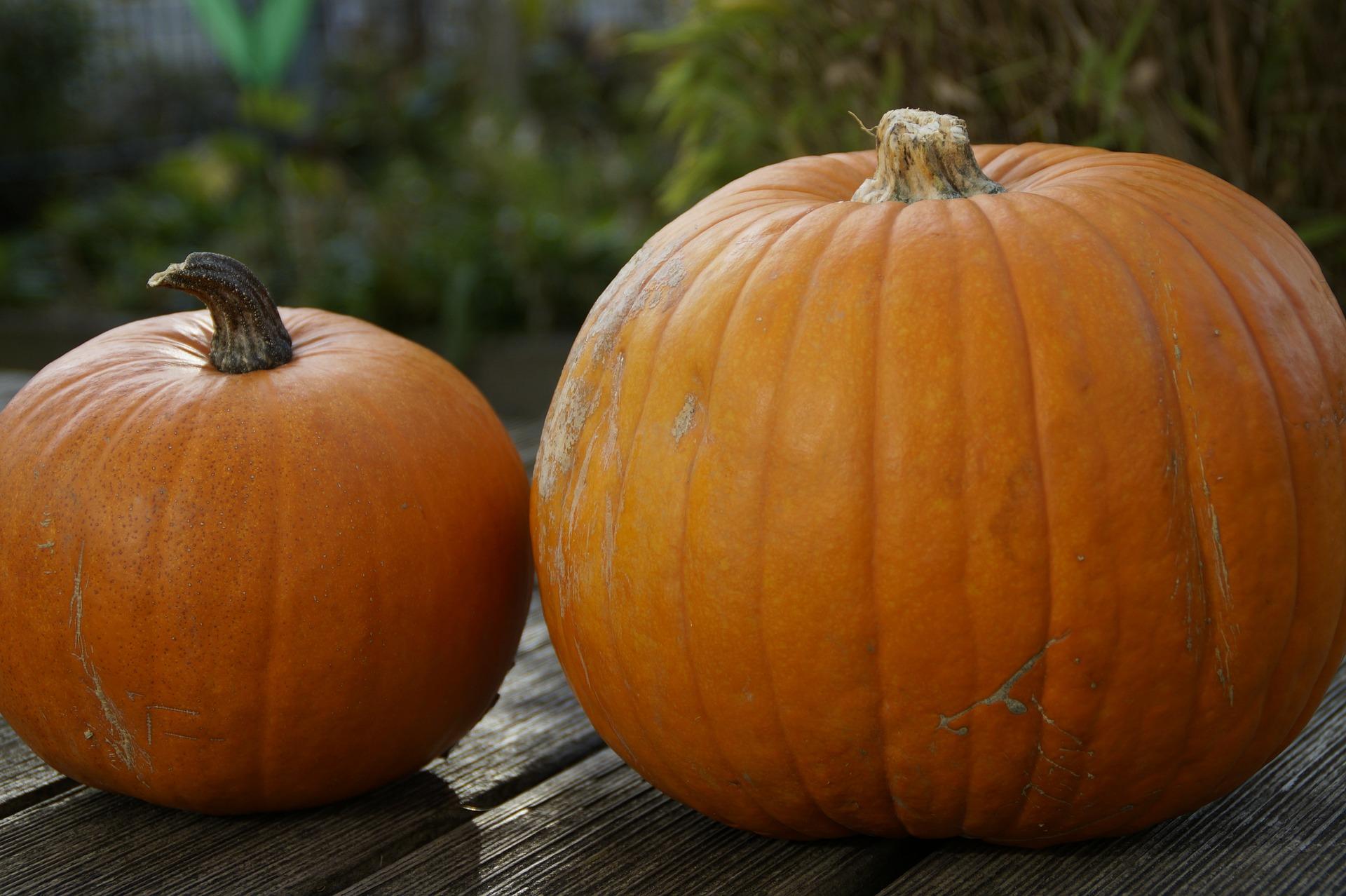 pumpkin-201088_1920.jpg