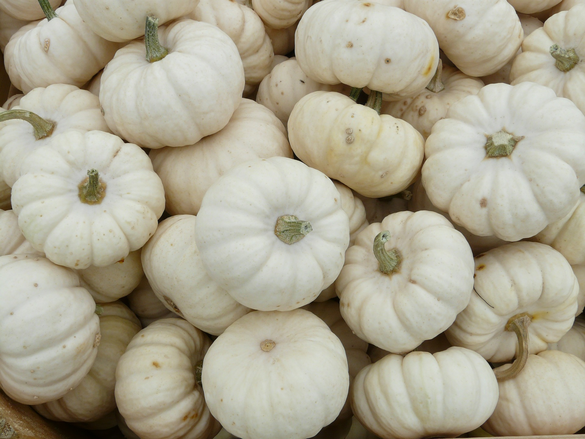 mini-pumpkins-61281_1920.jpg
