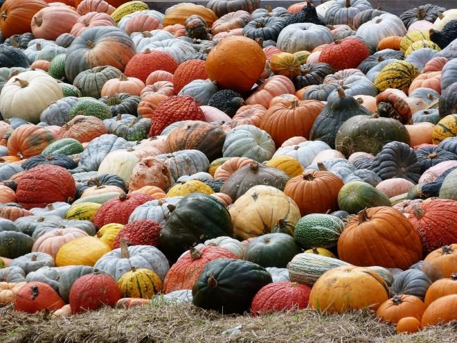 misc_pumpkins.jpg