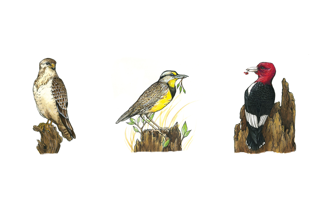 Cowling-Arboretum-Erica-Williams-birds.png