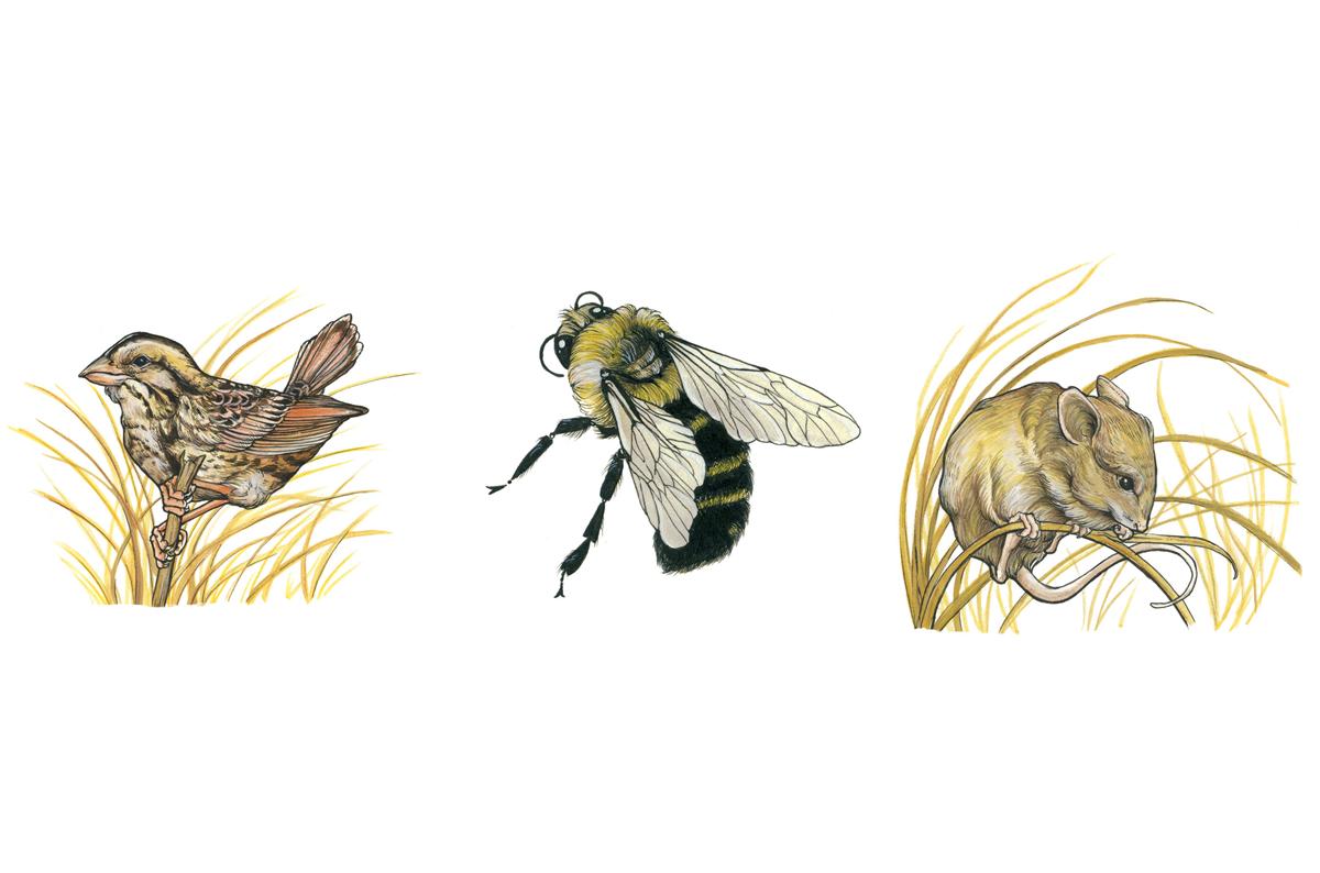 Cowling-Arboretum-Erica-Williams-Creatures.png