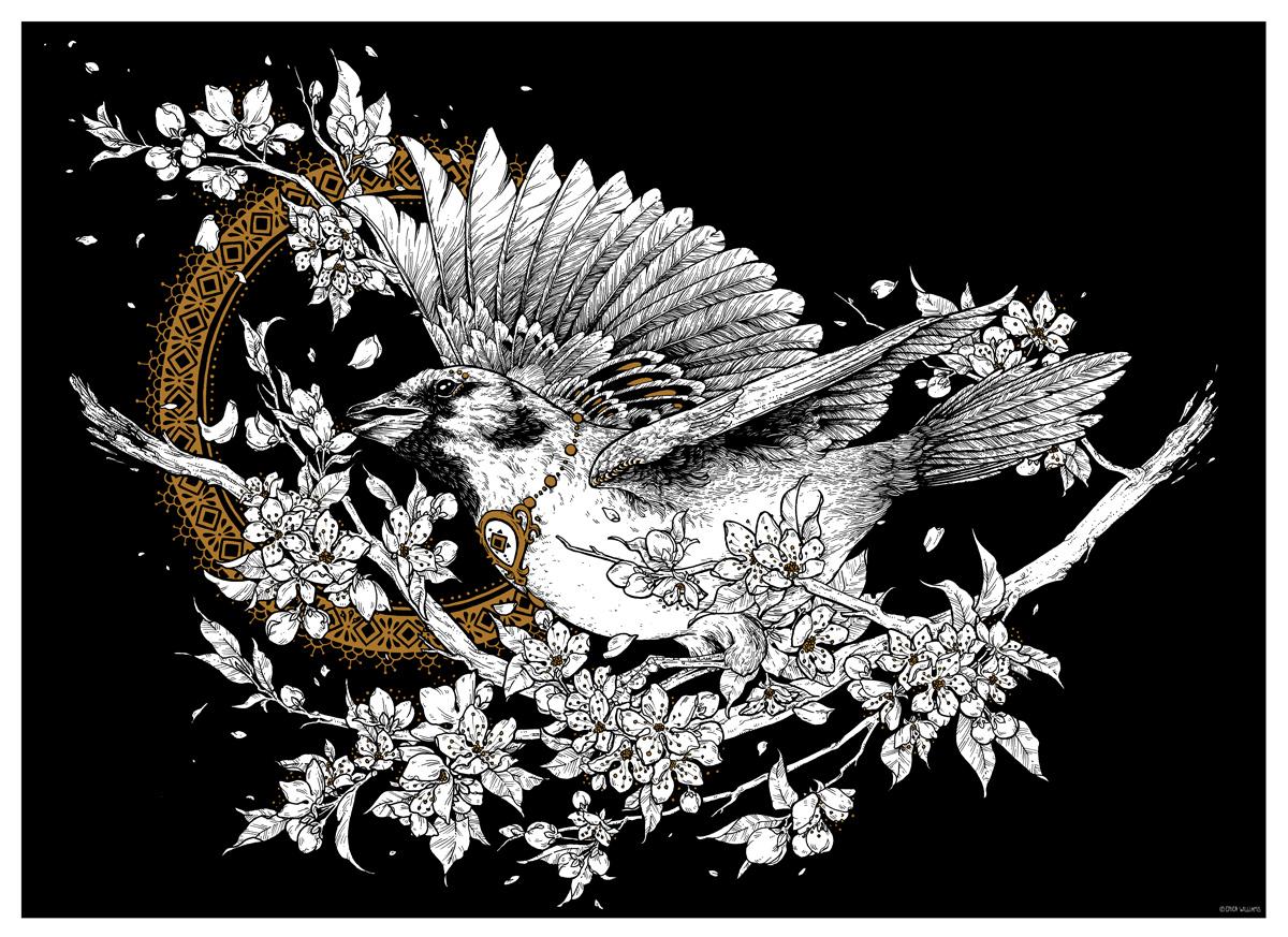 Sparrow-Erica-Williams.jpg