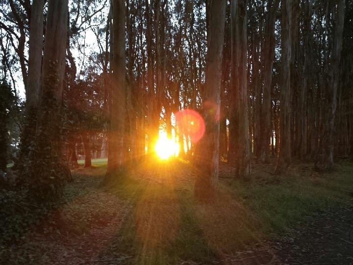 Presidio hike sunset