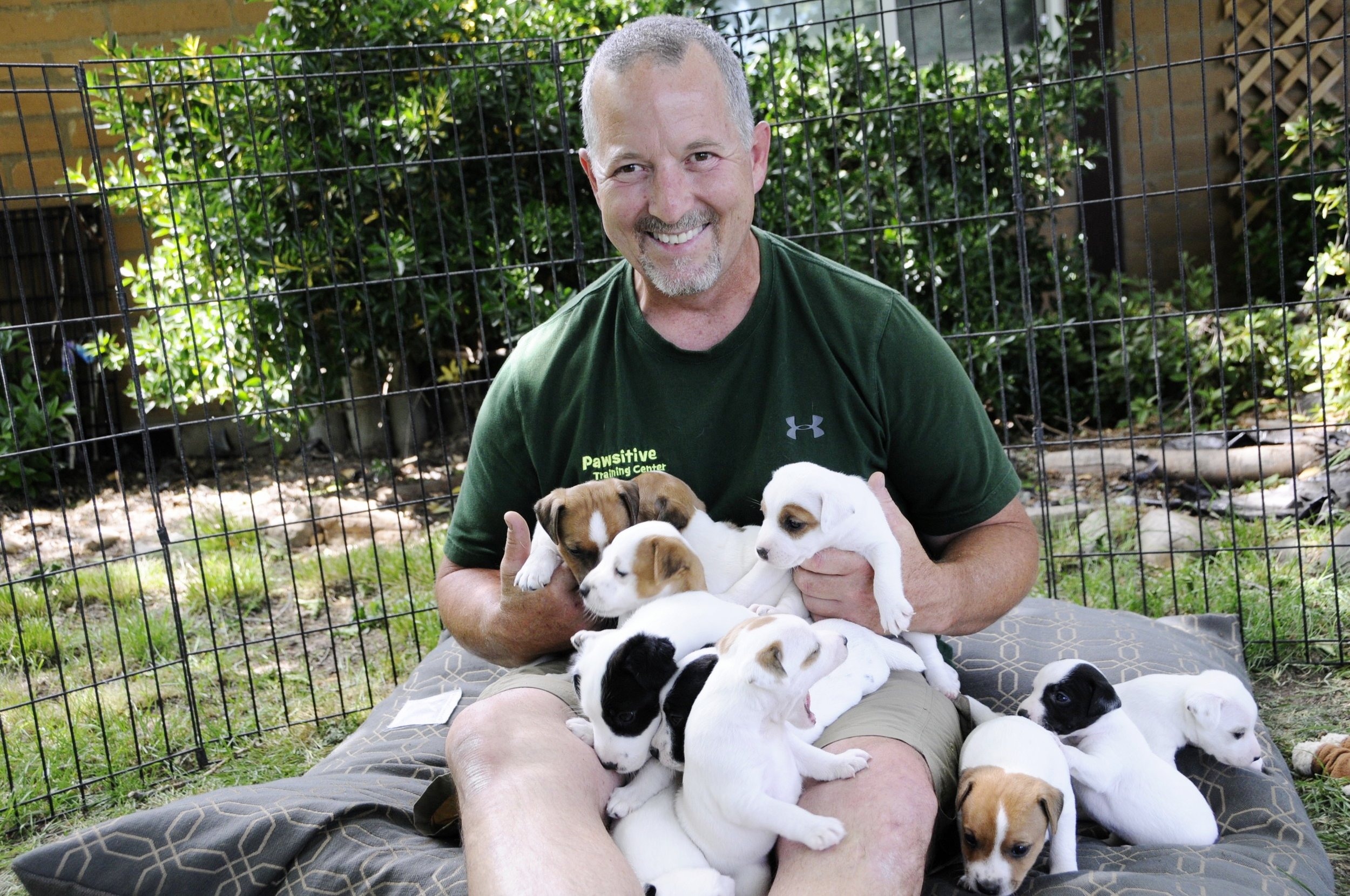 Best Jack Russell Terrier puppy and working dog trainer in Redding, CA, Anderson, Cottonwood, Red Bluff, Palo Cedro, Bella Vista and Shasta Lake City areas.