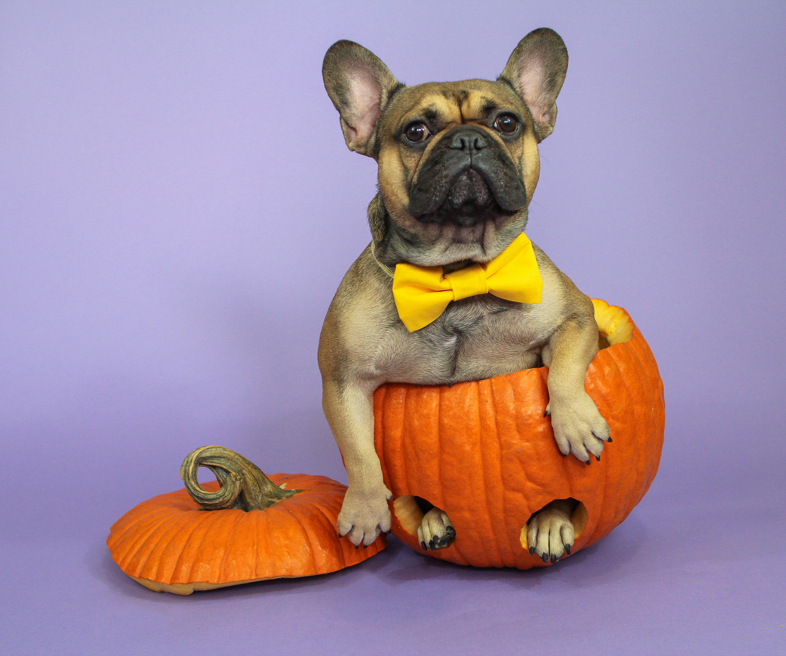 EastonPumpkin1b.jpg
