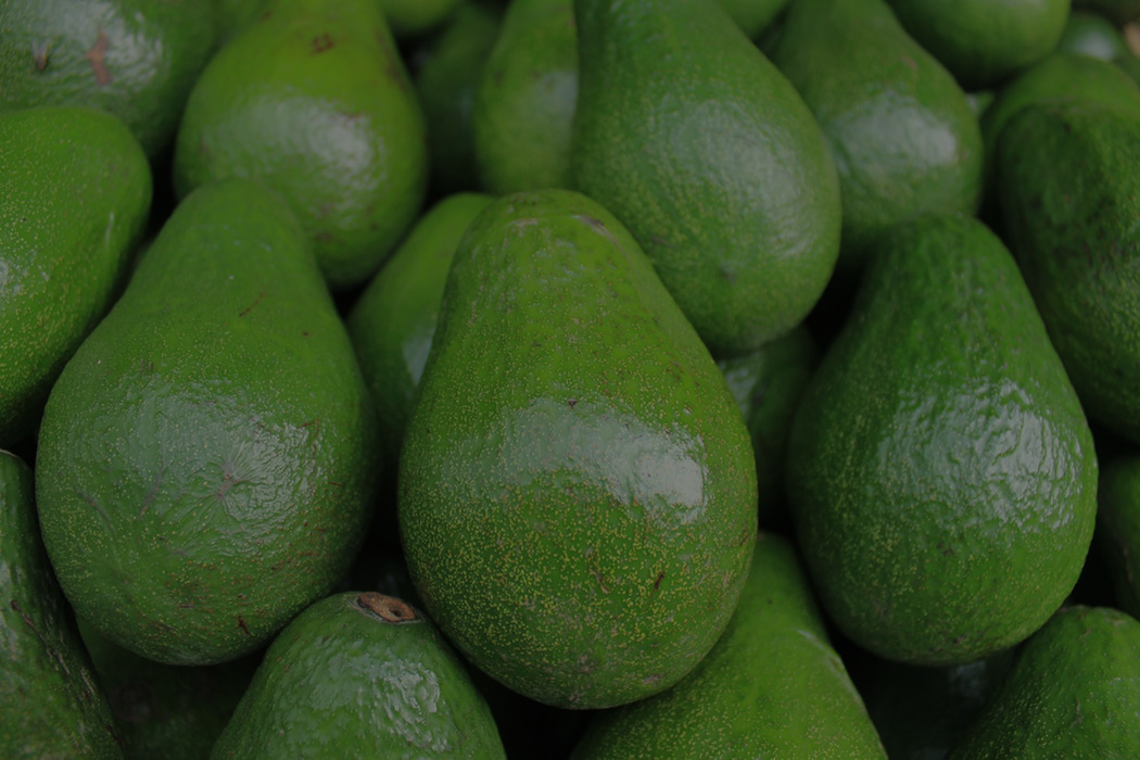 AVOCADO - INSPIRED BY THE FLAVOURS OF THE MEDITERRANEAN - Click here to learn more