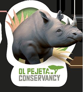 Lola the black rhino