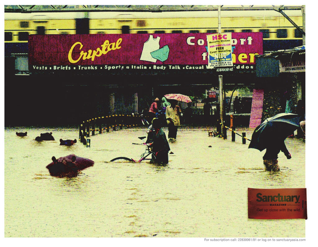 Hippos and giraffes are photoshopped into the street scenes