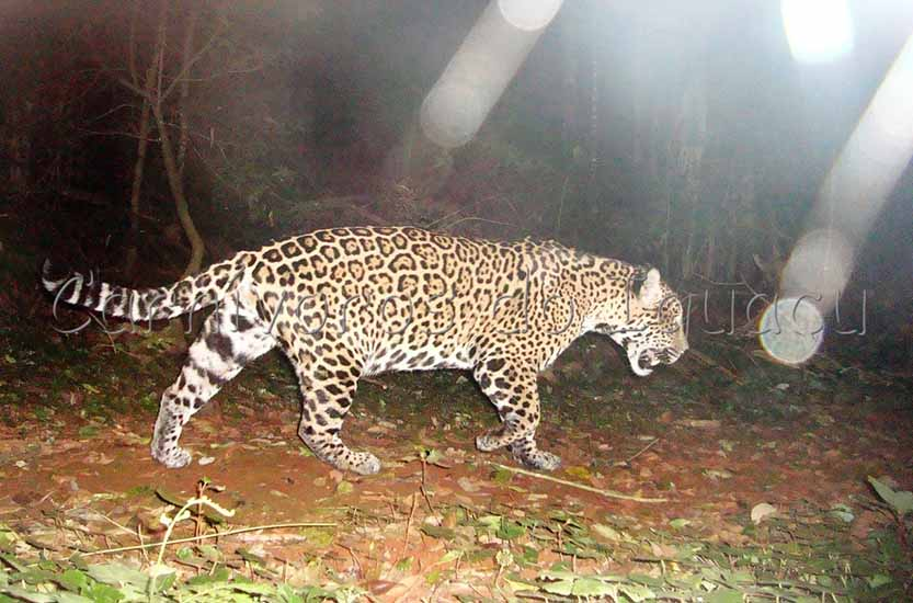 Another image from Atiaia, while she is on the prowl at night.