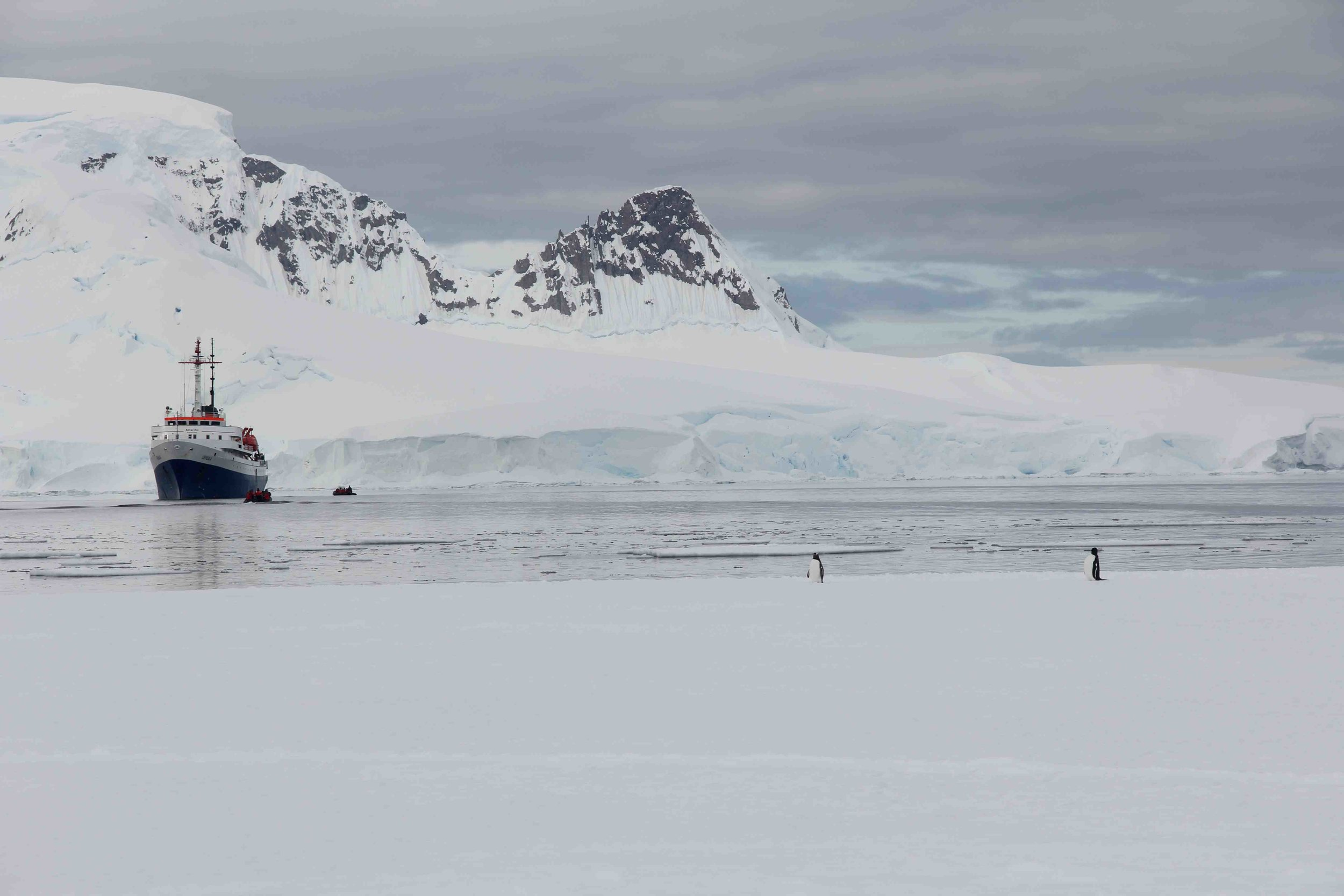 Gentoo penguin and the Ushuaia at Wilhelmina Bay fast ice.jpg