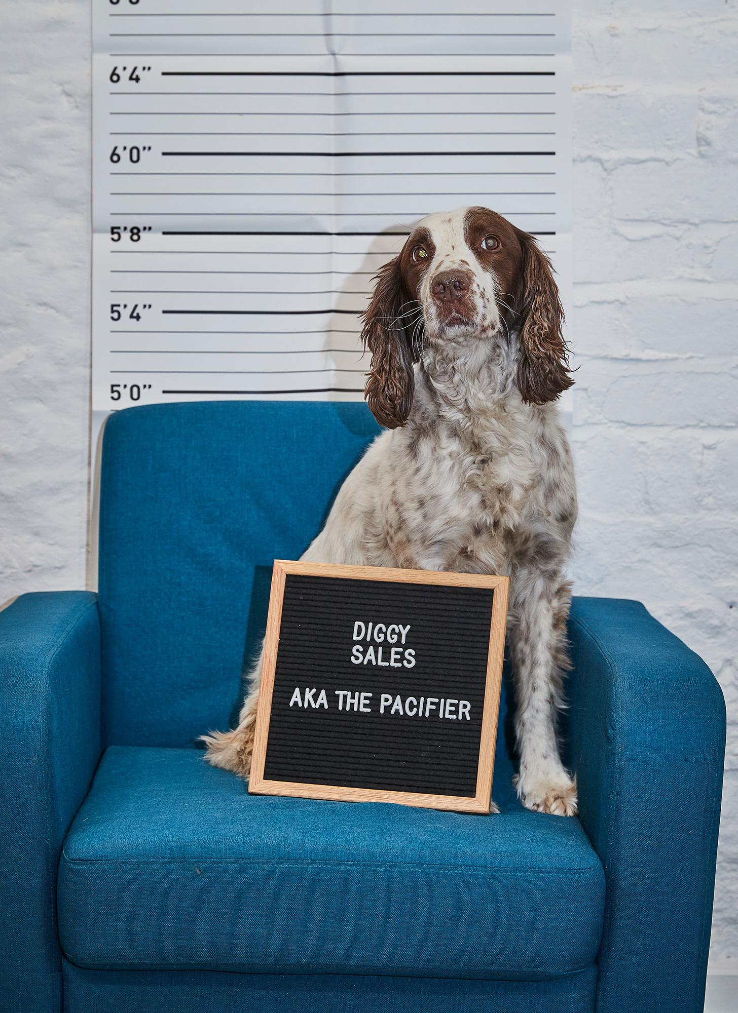 saxbys-cider-digg-the-dog.jpg