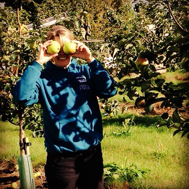 apple picking at Saxby's Cider