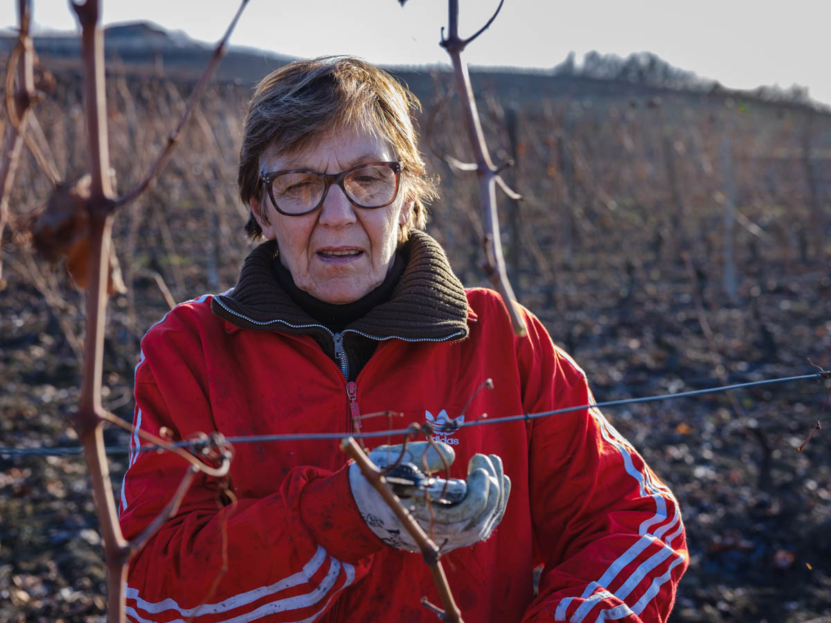 Pruning the wines in mid-winter to prepare the vineyard for another good vintage at Foglino 7 winery in Castel Boglione