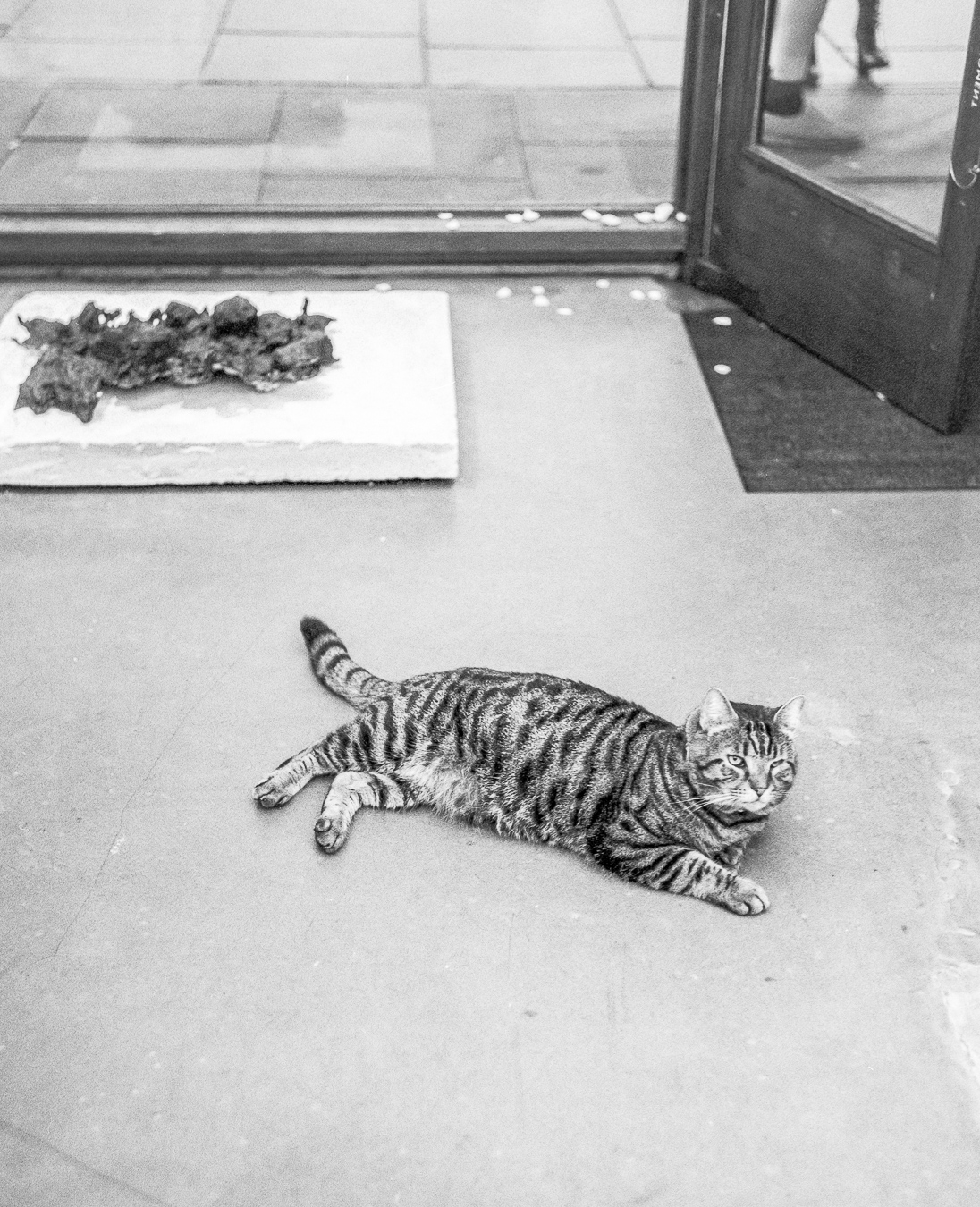 Cat in the exhibition Rift by Theodore Ereira-Guyer