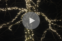 """Click above to hear  Sean Waterbury  read his first poem of the collection, """"Wonders."""""""